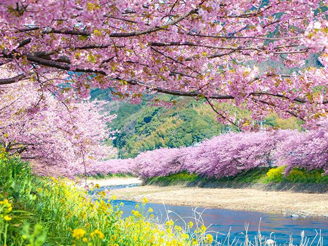 哇!原來日本的櫻花季有三個月!-必勝賞櫻攻略報你知